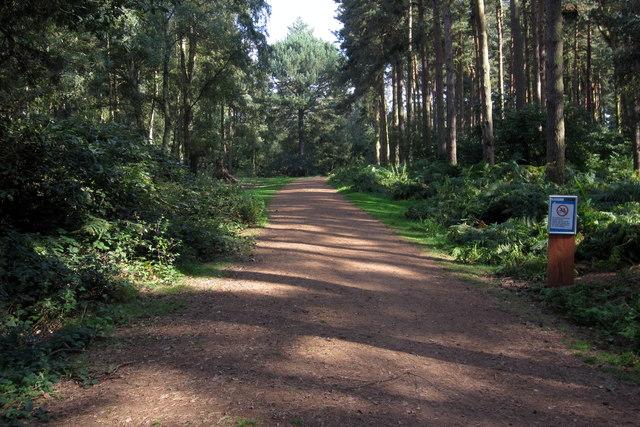 Track through Rowney warren Woods