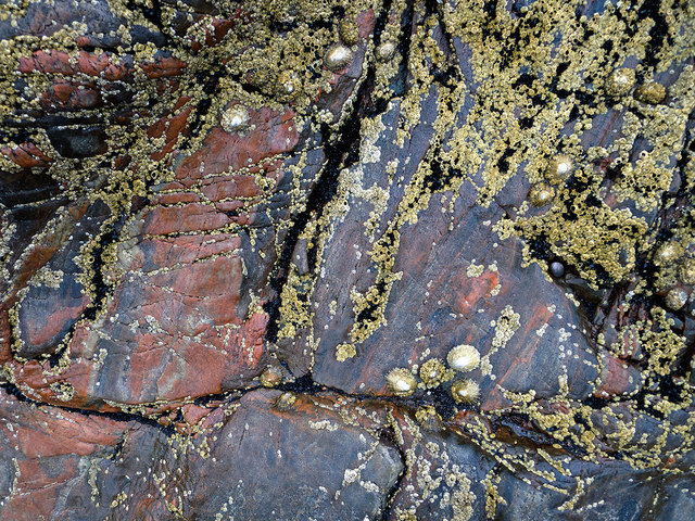 Seashore life on multi-coloured rock by Scart Craig