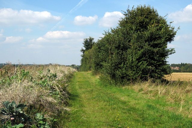 Hedge and track to Gracious Farm
