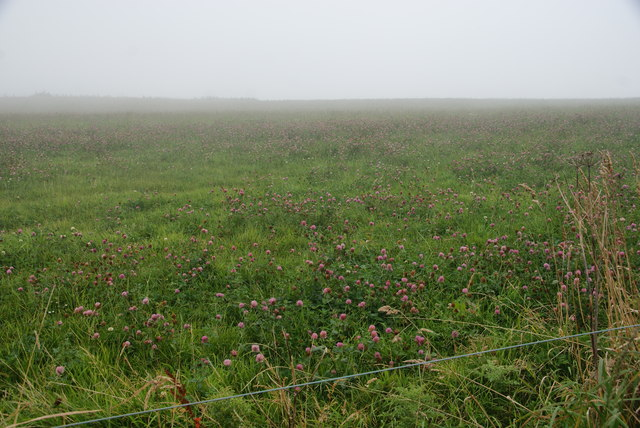 Clover field on the edge of Ravenscar