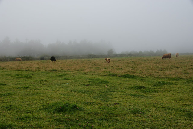 Cows near Smugglers Rock