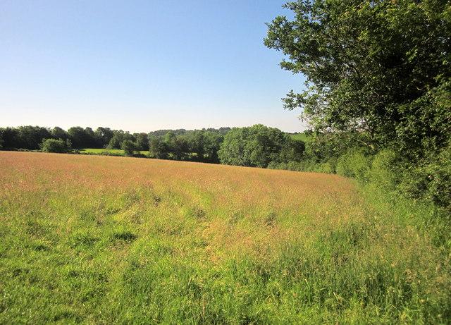 Field by Quay Lane