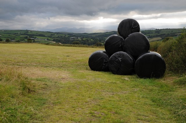 Silage bales opposite Buarth Cerrig