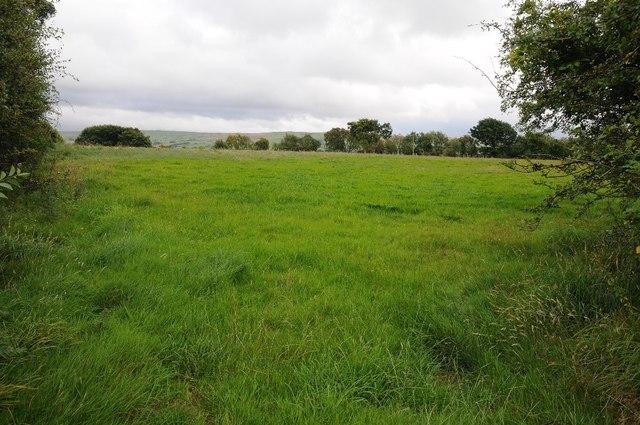 Field near Cefn-y-castell