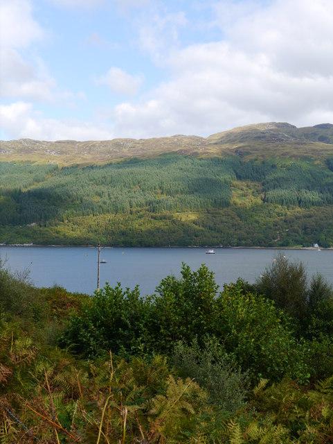 Woodland Beside Loch Goil