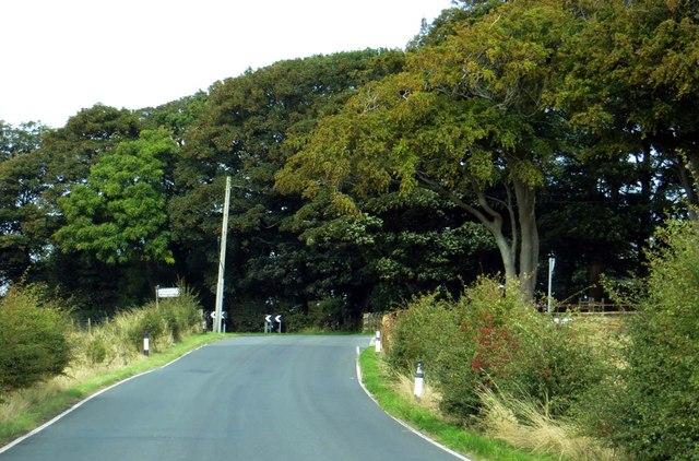 Black Lane by Cogie Hill Farm