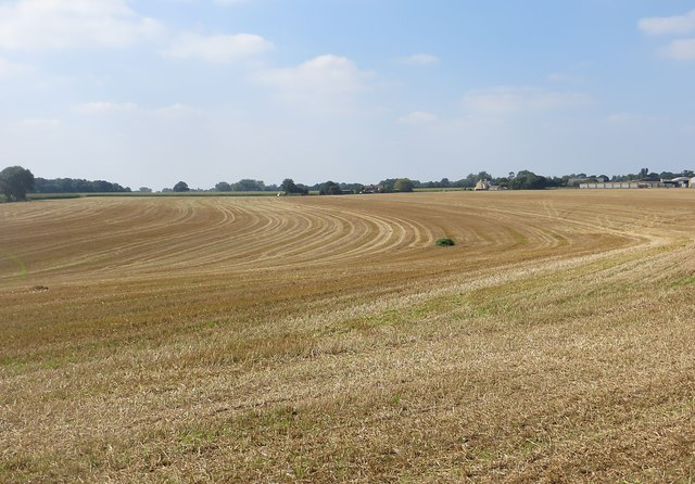 Stubble field near Burrough Green