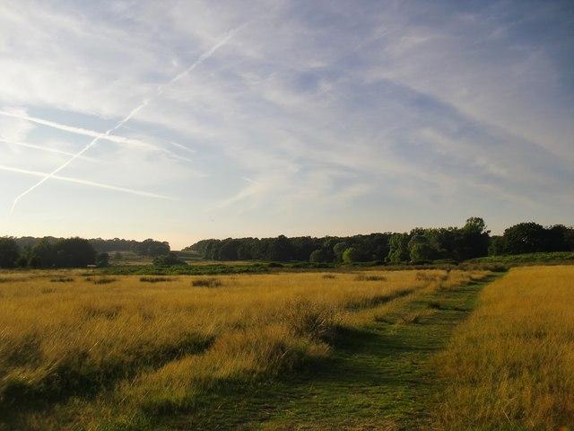 Path across Lawn Field