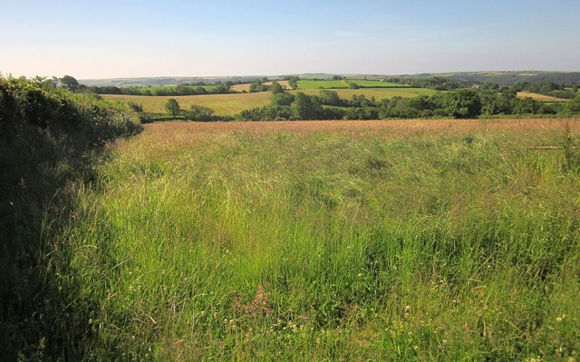 Field by Cumble Tor Lane