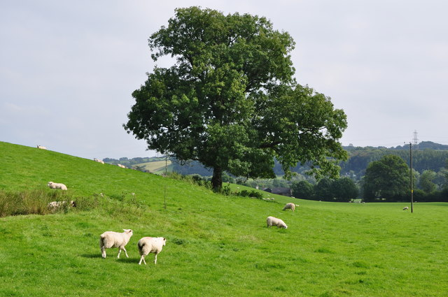 West Somerset : Grassy Field & Sheep