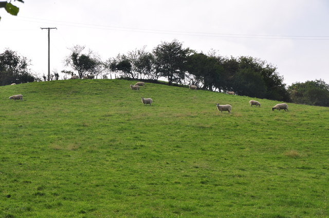 West Somerset : Grassy Hillside