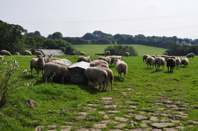 Mid Devon : Grassy Field & Sheep