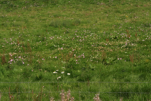 Wildflower meadow east of the path to Thorpe le Vale