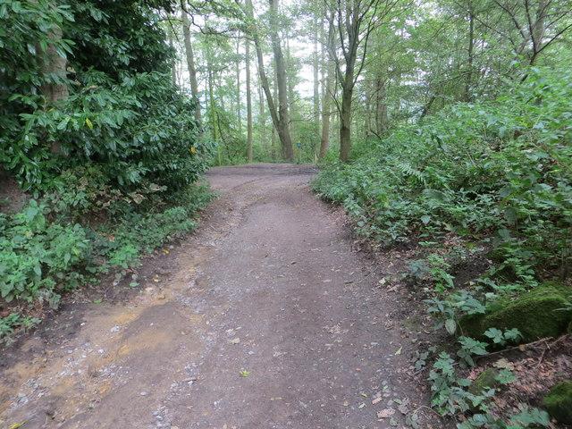 Track through Stub House Plantation