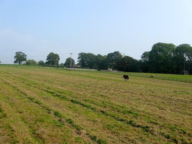 Limekiln Field