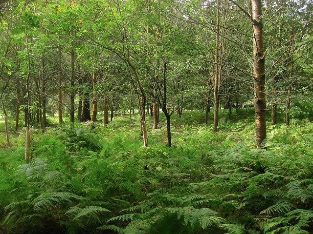Highlands Wood