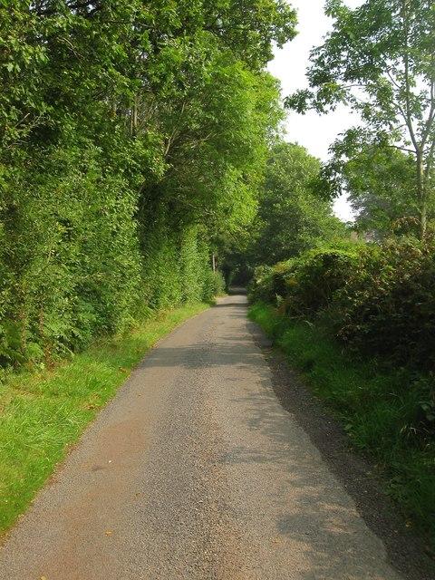 Buncton Lane