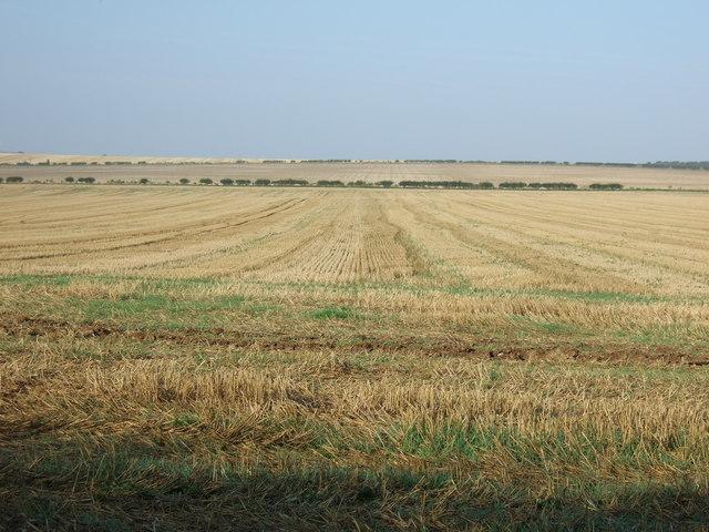 Stubble field, Thornholme Field