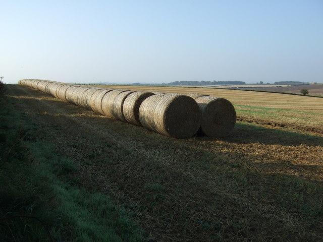 Round bales, Thornholme Field
