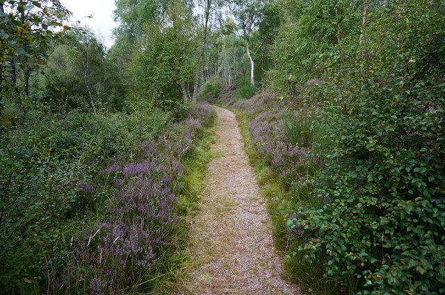 Woodland walk at Ralia