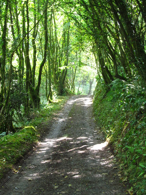 Shaded path at Laugharne