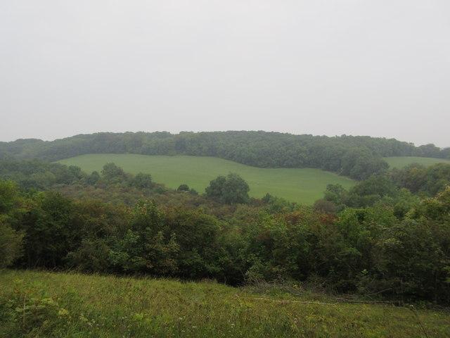 View of Stubbs Copse