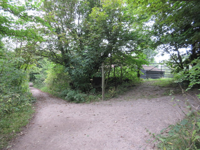 Bridleway junction in Great Church Wood