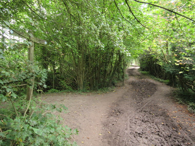 Path junction in Great Church Wood