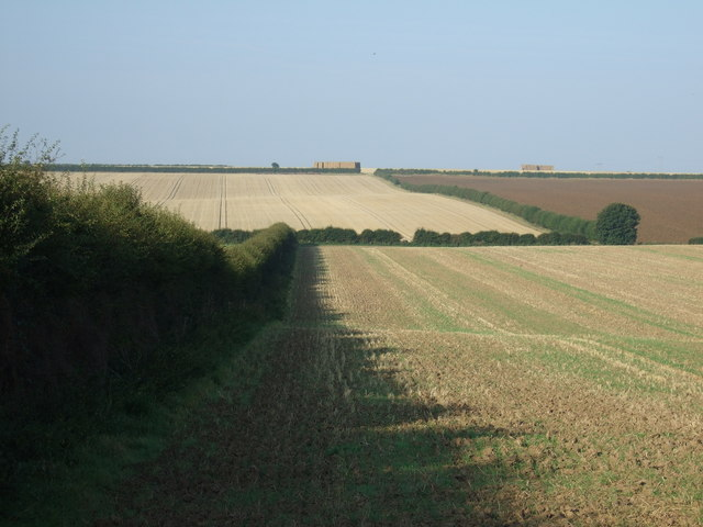 Farmland and hedgerow, Thornholme Field