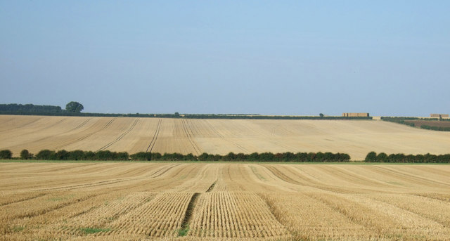 Stubble field, Thornholme Field