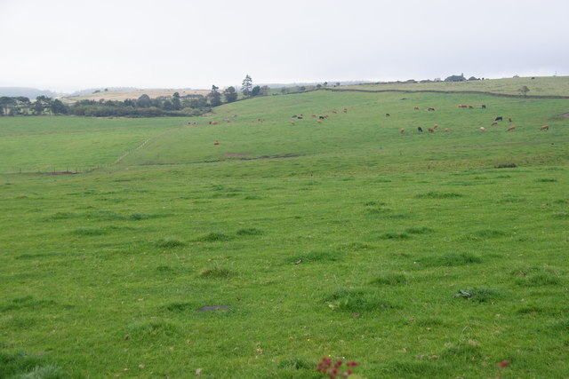 Grazing land above Staintondale