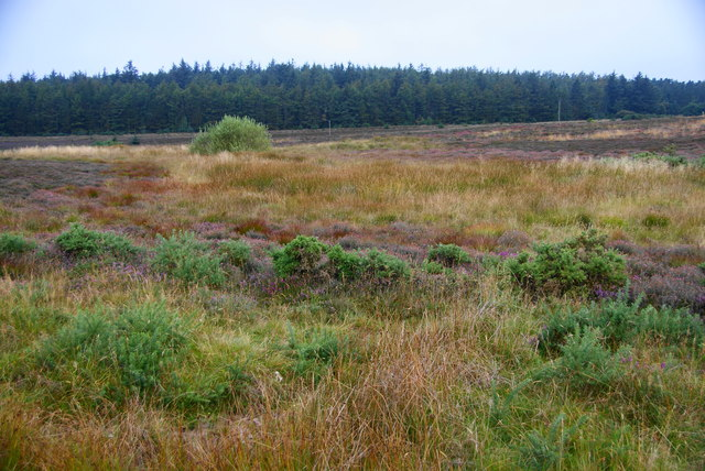 Scrub and forest on Staintondale Moor
