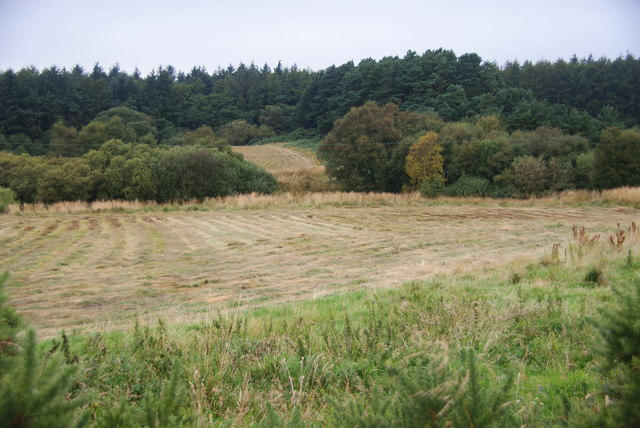 Harvested grass above Gainforth Wath