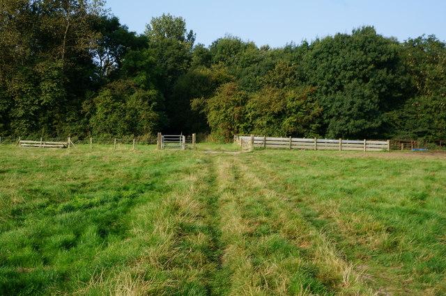 Bridleway towards Autby Wood