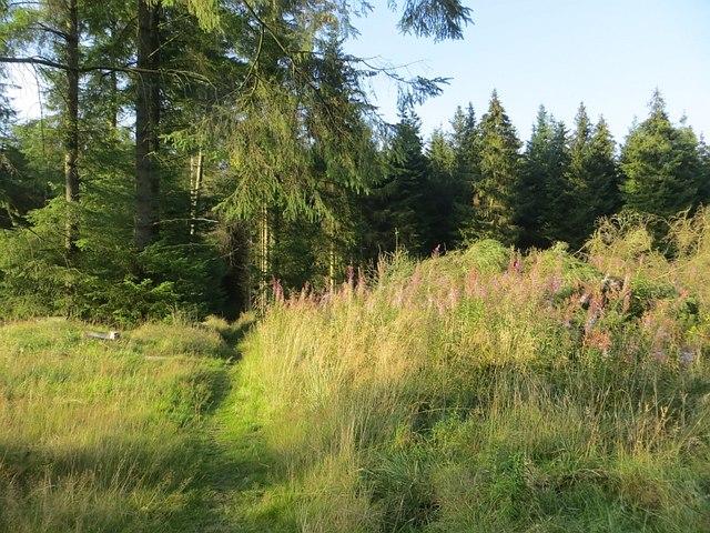 Path, Beecraigs Wood