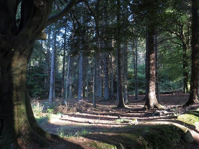 Beecraigs Wood