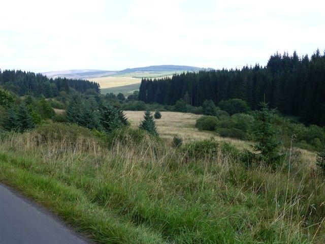 A clearing in Kielder Forest