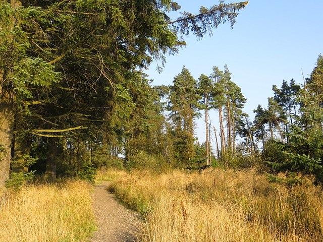 Path, blue mountain bike route