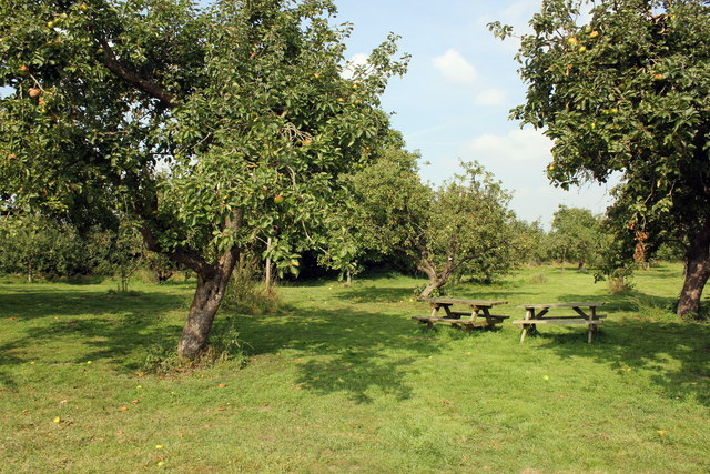 The Orchard at Attingham Park