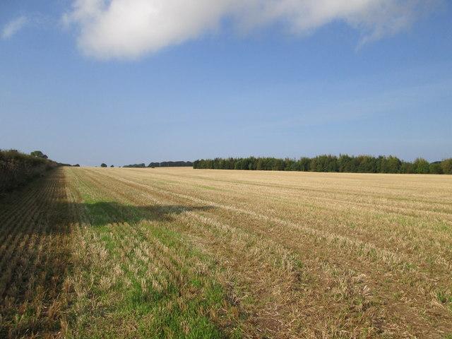 Stubble  fields  on  Binnington  Ness