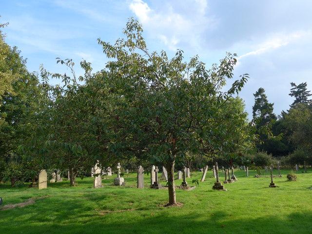 Saint George, Trotton:  late summer in the churchyard (a)