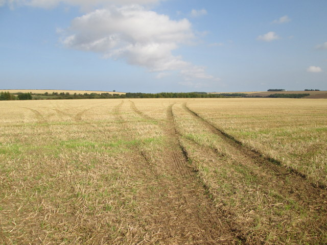 Tracks  in  an  empty  stubble  field