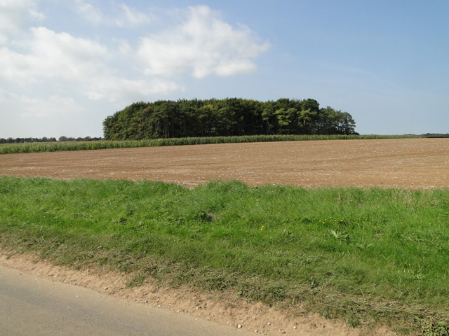 Copse north of Burnham Road