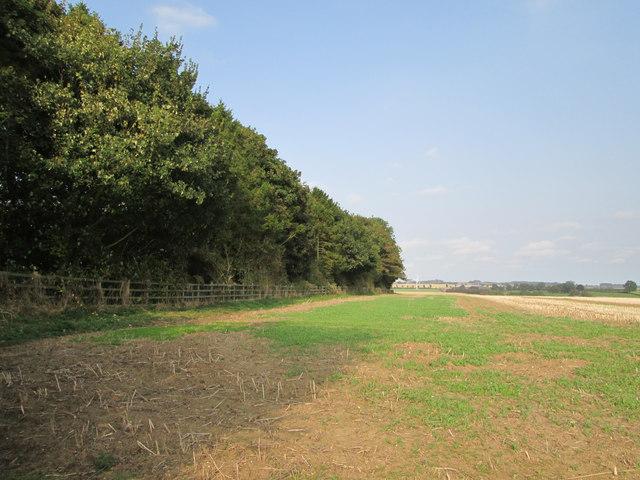 Windbreak  trees  around  covered  reservoir