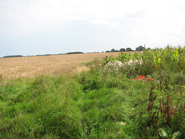 Fields by Sunderland Farm
