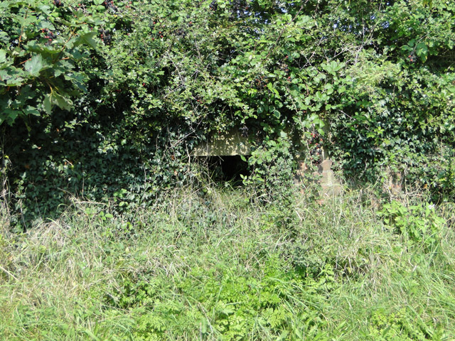 Pillbox embrasure in the hedge