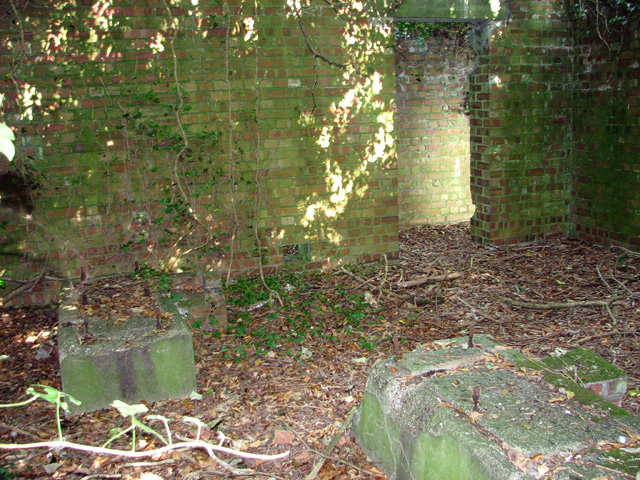 Overgrown building in the wood ( interior)