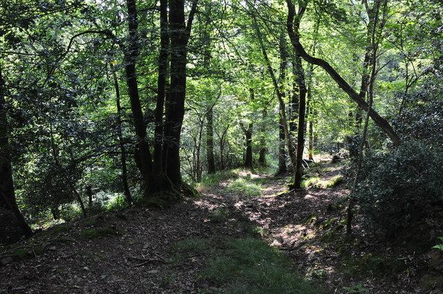 Mid Devon : Woodland Path