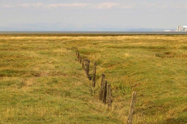 Fenceposts on Pilling Marsh