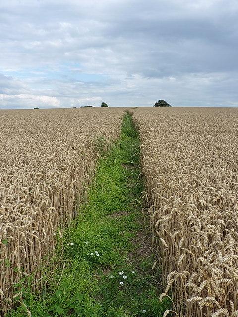Bridleway above Brookfield Farm